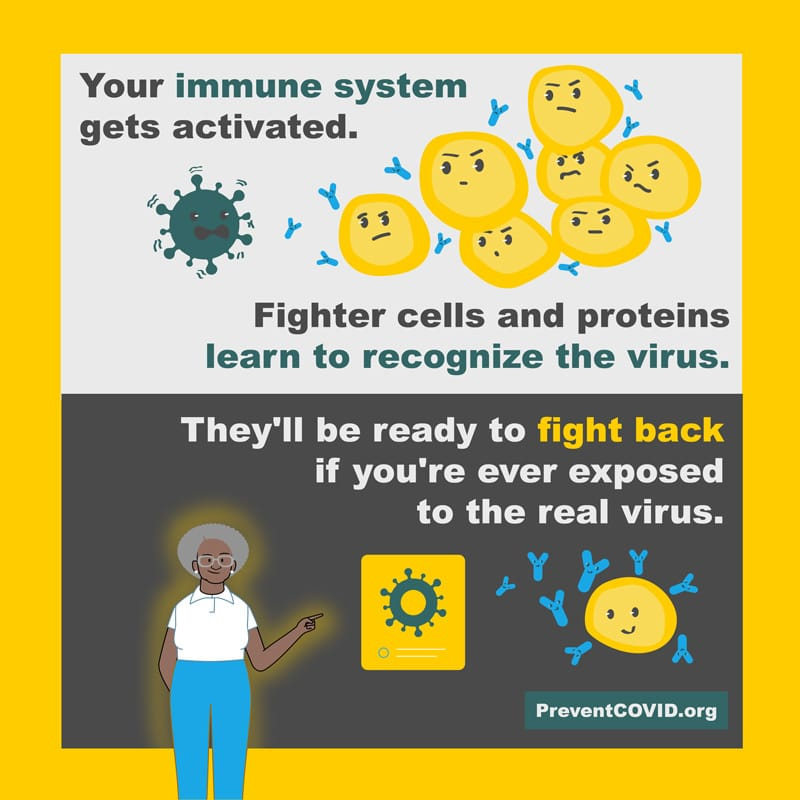 fighter cells and proyeins learn to recognize the virus